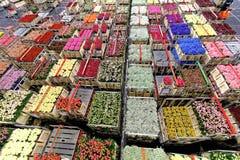 Kisten mit den Blumen bereit zur Verteilung Stockbilder