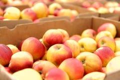 Kisten voll Äpfel Stockbild