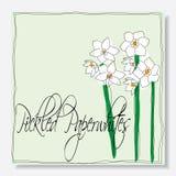 Kiszeni paperwhites kwiaty ilustracja wektor