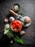 Kiszeni pomidory w szklanym słoju z czosnkiem, pikantność i Podpalanym liściem, zdjęcie royalty free