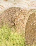 Kiszonek bele w lato krajobrazie zdjęcie stock