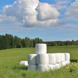 Kiszonek bele w pięknym lato krajobrazie Obrazy Stock