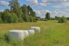 Kiszonek bele w pięknym lato krajobrazie Zdjęcie Stock