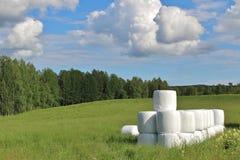 Kiszonek bele w pięknym lato krajobrazie Obrazy Royalty Free