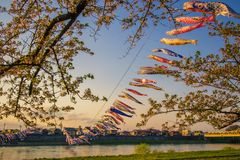 Kitakami,Iwate,Tohoku,Japan on April 26,2018:Carp streamers or koinobori over the Kitakami River and cherry blossoms at Tenshoch. Tenshochi is located by the stock photography
