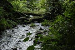Kitanizawa halny strumień Zdjęcie Royalty Free