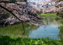 Kitanomaru national  park Stock Photography
