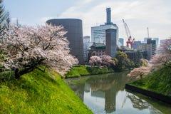 Kitanomaru park narodowy Zdjęcia Royalty Free