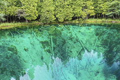 Kitch-Iti-Kipi (The Big Spring). Lime-encrusted tree trunks lie beneath the clear waters of Michigan's Kitch-it-kipi (The Big Spring) not far from Manistique Royalty Free Stock Image