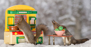 In the kitchen. Close up of two red squirrels standing  with a kitchen and behind a table with plate and vegetables Stock Images