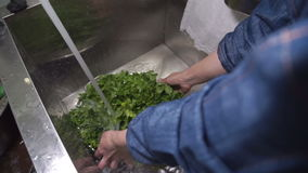 In the kitchen Cook a colander wash parsley in a deep sink. stock footage