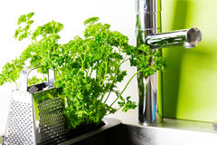 At kitchen: faucet, grater and parsley Stock Images