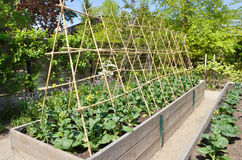 Kitchen Garden Stock Image