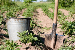 Kitchen garden. Bucket and shovel on kitchen garden with potato beds Royalty Free Stock Images