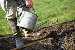 In kitchen garden. An old peasant with a watering-can  watering the soil in his kitchen garden Royalty Free Stock Images