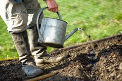 In kitchen garden. An old peasant with a watering-can  watering the soil in his kitchen garden Stock Photo