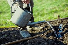 In kitchen garden. An old peasant with a watering-can  watering the soil in his kitchen garden Stock Image