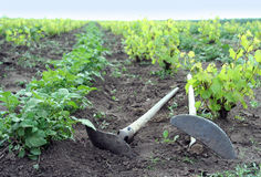 Kitchen garden. After work tools on the earth lie Royalty Free Stock Image