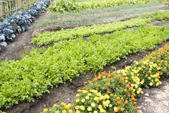 Kitchen Garden Royalty Free Stock Photography