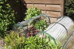 Kitchen garden for children Royalty Free Stock Photography
