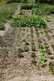 Kitchen garden with dry dirt Royalty Free Stock Image