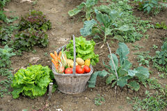 Kitchen garden four Stock Image