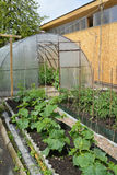 Kitchen garden and the greenhouse from polycarbonate on a country site Royalty Free Stock Photography