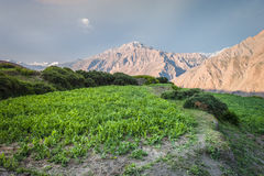Kitchen garden in the Himalayas Royalty Free Stock Images