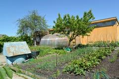 Kitchen garden on the seasonal dacha Stock Image