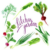 Kitchen garden Royalty Free Stock Photo