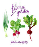 Kitchen garden Royalty Free Stock Image