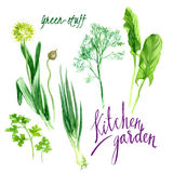 Kitchen garden Royalty Free Stock Image