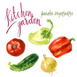 Kitchen garden Royalty Free Stock Photography
