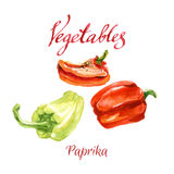 Kitchen garden. Vector watercolor sketch. Vegetables from a kitchen garden. Paprika Royalty Free Stock Images