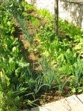 Kitchen garden Royalty Free Stock Photos