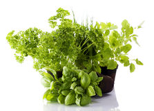 Kitchen herb pots Royalty Free Stock Image