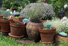Kitchen herb potted plants Royalty Free Stock Photography