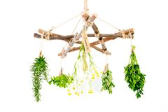 Kitchen - Herbal Witch Branch Pentagram Herb Dryer with witches. Besom and fresh green herbs on white background stock image