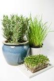 Kitchen herbs Stock Photo