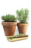 Kitchen herbs Stock Image