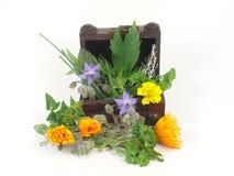 Kitchen Herbs Stock Photos