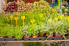 Kitchen herbs Royalty Free Stock Photography