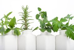 Kitchen herbs. Herbs in white vases stock images
