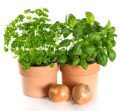 Kitchen herbs basil and parsley in pots with onion Stock Photos