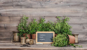 Kitchen herbs with chalkboard. Food  ingredients rosemary, thyme Stock Photo