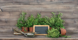 Kitchen herbs chalkboard garden tools Food ingredients. Kitchen herbs with chalkboard and garden tools. Food ingredients rosemary, thyme, oregano Stock Photo
