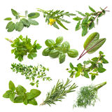 Kitchen herbs collection. Isolated on white background Royalty Free Stock Photography