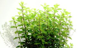 Kitchen herbs stock video