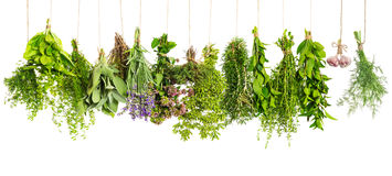 Kitchen herbs hanging isolated on white. Food ingredients Stock Photo