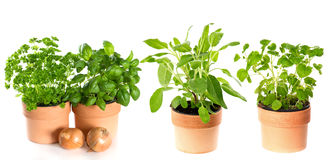 Kitchen herbs isolated on white background Stock Photo